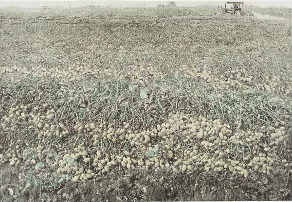 胡振江《家乡的田野上》46x64cm-石版.jpg